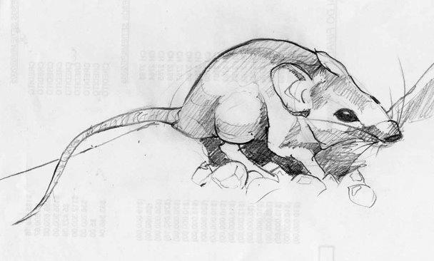 El oro y las ratas | En Clave de Niños