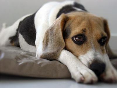 El perro y el trozo de carne juan ruiz arcipreste de for Estanque para perros