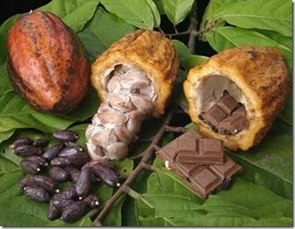 cacao%20historia