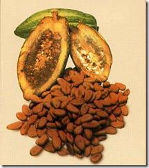 cacao_2_01