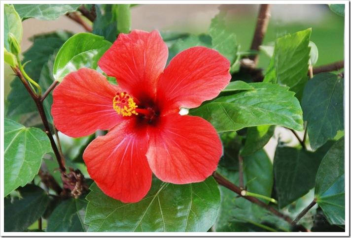 La-flor-de-un-dia-a19212599