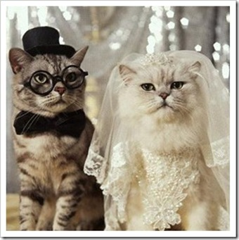 gatos casados_thumb[3]
