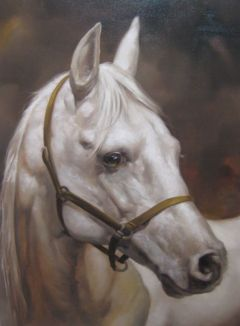 caballo bco