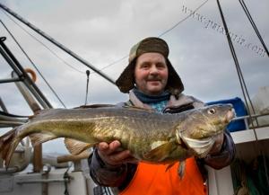 Pesca de bacalao