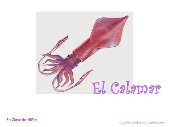 el calamar