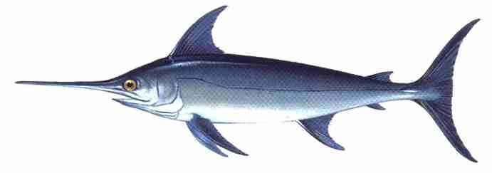 Fondo del mar en clave de ni os for Curiosidades del pez espada