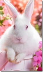 conejo_blanco_fon_ani_1