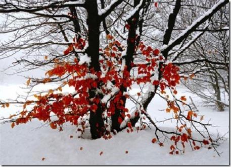 jardin-en-invierno-500x362