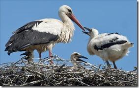 cigüeñas nido