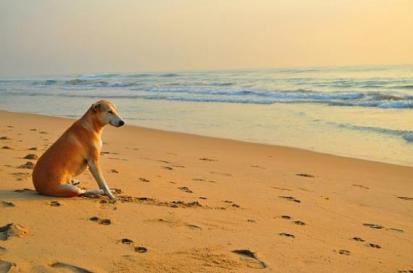 perros-en-playa