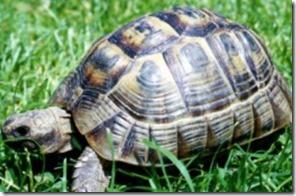 caparazón tortuga