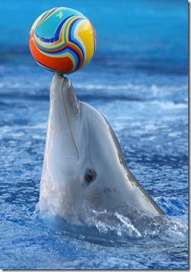 delf_n-pelota