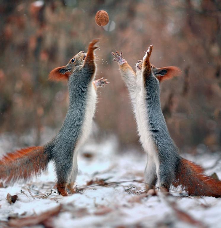 fotos-ardillas-invierno-rusia-vadim-trunov-9.jpg