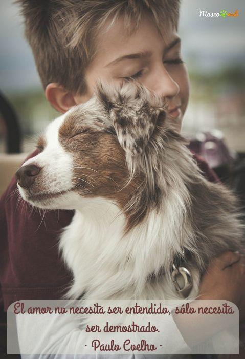 amor perro y niño